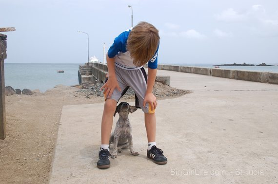 fishing village dog - St. Lucia