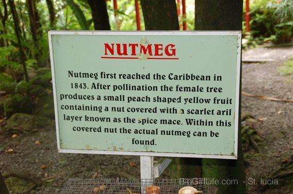 St. Lucia - nutmeg