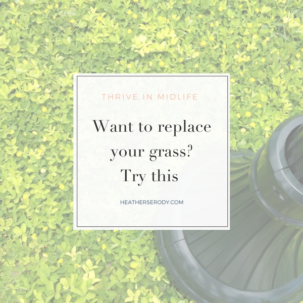 Want to replace your grass- Try this. - Thrive In Midlife